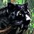 http://strangers.jclans.ru/artifacts/page/ezdovoe_pantera_1_sm.png